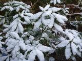 20140307雪の朝2