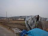 20111221ウド小屋シート張り1