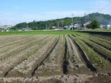 20130627豆植え