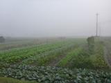 20131030霧の三田
