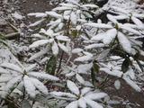 20150101雪の元旦1