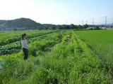 20130629自然農園