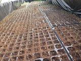 20140202トマト発芽2