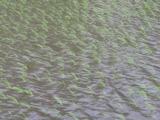 20120619台風4号