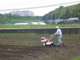 20130626豆植え準備