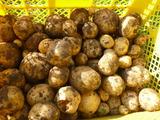 20130629自然農園ジャガイモ