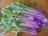 20141105紫水菜