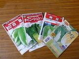 20130822白菜種まき