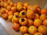 20111113渋柿
