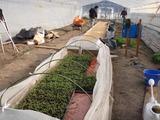 20120221トマト準備
