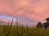 20120822夕焼け1