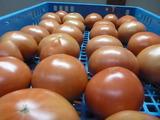 20150605トマト出荷