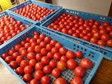 20140727トマト最終