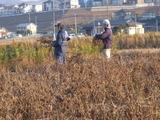 20131201黒豆収穫