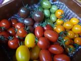 20140607ミニトマト
