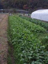 20111123畑