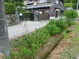20130602道下花壇