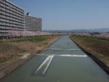 20120412桜3