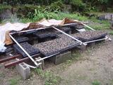 20120622黒豆の日よけ崩壊