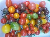 20150602ミニトマト1