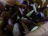 20140925紫白菜2