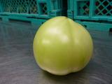 20140628青トマト