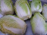 20130106タイニー、白菜