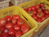 20120607トマト