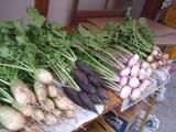 20111129根菜類