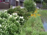 20120622花盛り