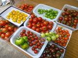 20130707プチトマト