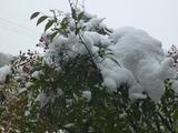 20140208雪5