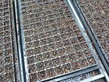 20130603黒豆播種1