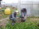 20131208サトイモ洗い2