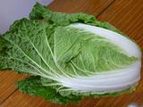 20131112白菜