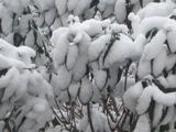 20150102雪4