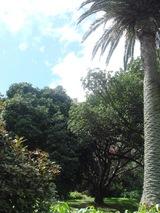 Auckland 004