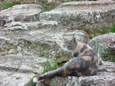 1512遺跡のネコ (2)