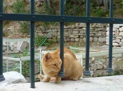 1512遺跡のネコ (1)
