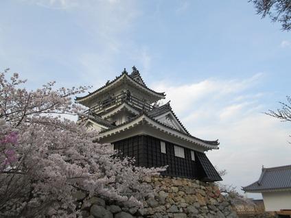 浜松城桜満開時期