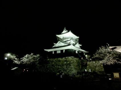 浜松城公園夜桜