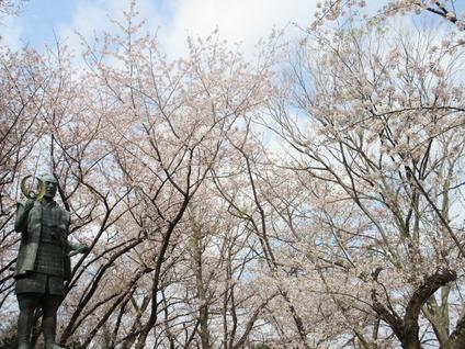 浜松城桜満開