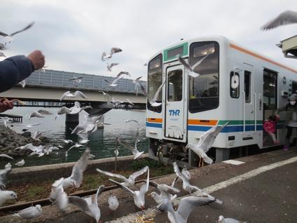 天竜浜名湖鉄道かもめ餌付け体験