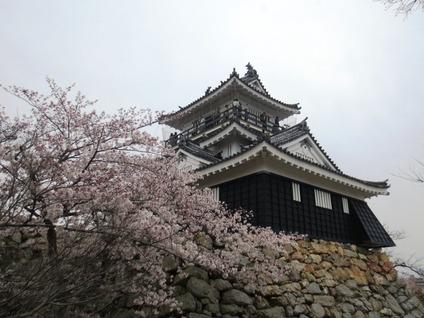 浜松城 桜 開花