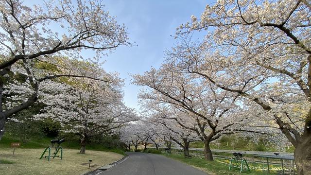 浜松市フラワーパーク