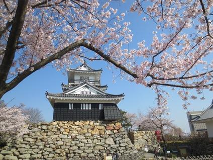 浜松城天守閣桜