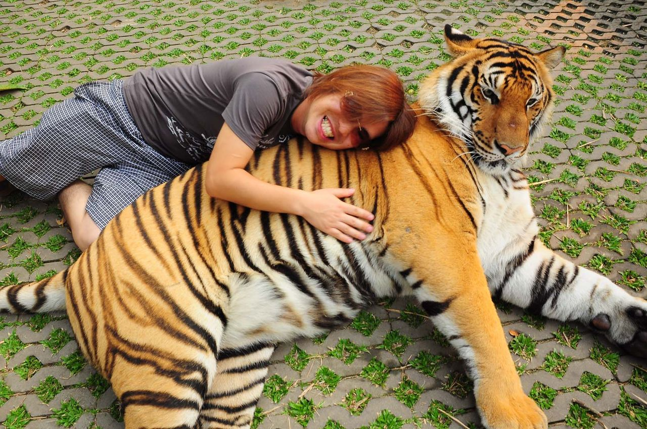虎の画像 p1_10
