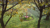 jg-autumn