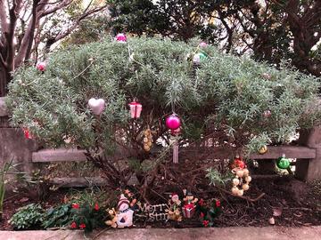 クリスマスの花壇2