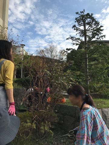 花壇冬支度1
